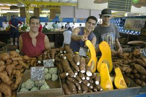 cubanorgfarmers